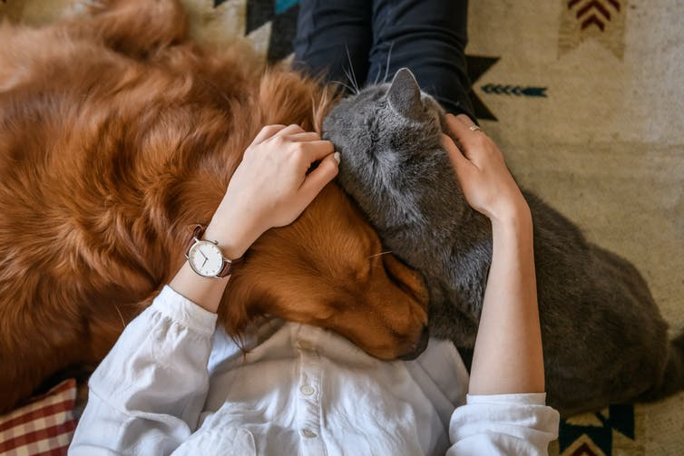 Aerial view of a cat and a dog on a person's lap.